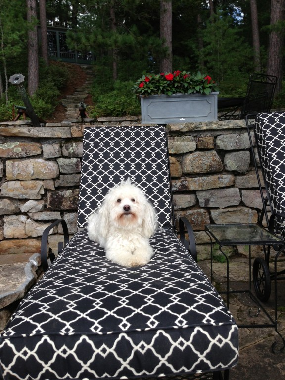 Coco in The Adirondacks